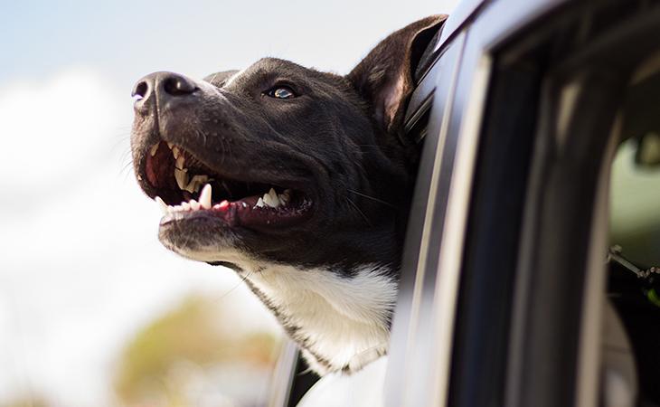 f8ad34184c4ab Cestujete so psom? Na tieto veci si dávajte pozor