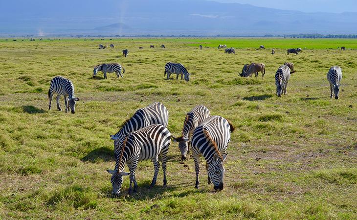 Zebry vo svojom prirodzenom prostredí